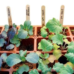 Seed-Starting: a DIY Guide to Growing Your Own Flowers, Vegetables & Herbs