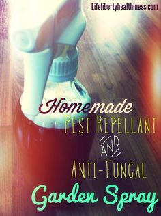 Homemade All-Natural Pest-Repellant and Anti-Fungal Garden Spray! From Life, Liberty, and the Pursuit of Healthiness