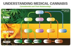 Understand Medical Marijuana and Cannabinoids Endocannabinoid System, Medical Cannabis, Pills, Drugs, Healing, Relationship, Education, Mj, Infographics