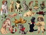 Grab Bag Miscellaneous DOGS and CATS