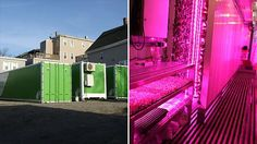 This farm in a box generates $15,000 a month. Outfits the boxes with lights, growing racks and irrigation systems -- creating what are essentially super efficient growing machines.
