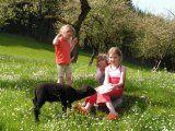 a lot of nature Dogs, Nature, Pictures, Animals, Apartments, Animais, Naturaleza, Animales, Photos
