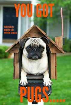 Have a great day friends #pugs #dogs #retweet #pug #follow #like #puglife #dog #aww #funny #fun #cute #lol #pugchat #Pugs #humor #pugsdaily