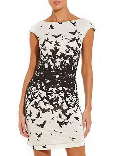 Bird Print Dress from New Look