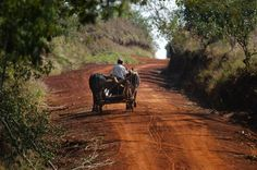El despertar de la selva Misiones - 09.12.2012 - lanacion.com