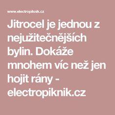 Jitrocel je jednou z nejužitečnějších bylin. Dokáže mnohem víc než jen hojit rány - electropiknik.cz