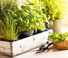 Healthy Foods Great for Beginner Gardeners | Fitbie