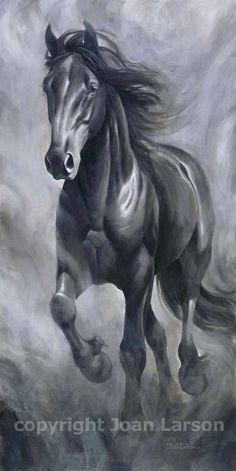Dream of Black Horse