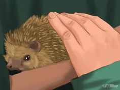 Imagen titulada Take Care of a Hedgehog Step 22