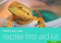 How to build a solid first aid kit for your favorite reptiles. How to build a solid first aid kit for your favorite reptiles. How to build a solid first aid kit for your favorite reptiles. Bearded Dragon Habitat, Bearded Dragon Cage, Rabbit Cages, Bearded Dragon Enclosure, Dragon Facts, Terrarium Reptile, Tortoise Care, Reptile Room, Pet Turtle