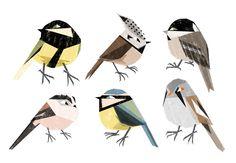birds! by elladraws