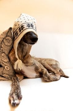 greyhound hat - If I had a dog with that hat on, I'd rename him Ron Weasley - I LOVE it!!