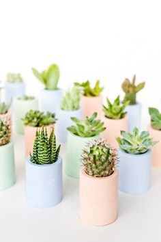 How to make mini pastel planters with pigmented plaster that you can make at home.