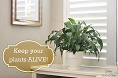 How I Keep My House Plants Alive