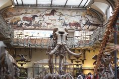 Axelle et ses caprices: Une journée au Muséum de l'Histoire Naturelle (Paris) [Lifestyle] [Bonnes Adresses]