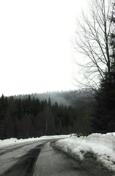 #forest #foggy #tree #road #winter #snow #creepy #scary #sky #depressed