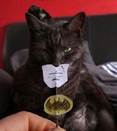 Batman ou Catman?