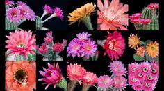 Freaky Flowers 3