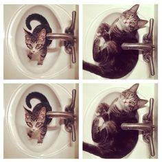 .@penny shima glanz shima glanz Douglas People | Happy international cat day!!!!