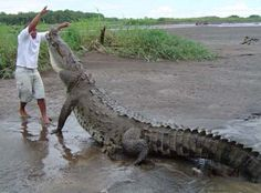 ~Crocodyliphobia - Fear of crocodiles.