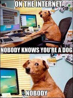 Goggle doggy