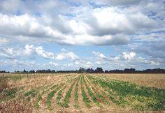 La Argentina lidera en el mundo las denominadas Buenas Prácticas Agrícolas que se conocen por su sigla BPC, al tener casi el 80% de su superficie cultivable bajo la actividad de siembra directa. Por: Matilde Fierro La Argentina lidera en el mundo las