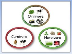 Herbivore carnivore omnivore paper plate food chains food this song helps students learn about omnivores carnivores and herbivores song written and recorded ccuart Gallery