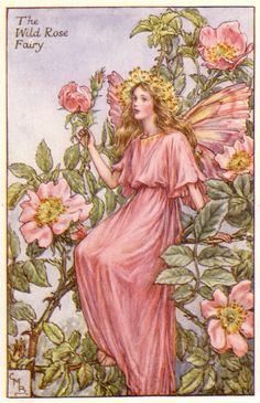 "Cicely Mary Barker, ""The Wild Rose Fairy"", illustration for ""Flower Fairies of the Summer"""