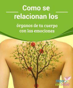Como se relacionan los órganos de tu cuerpo con las emociones Las emociones generan una tormenta de reacciones que afectan a los órganos de nuestro cuerpo. A conocerlas podremos saber que debemos cambiar.