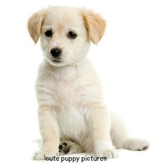 Nice and Cute pictures of puppies and dogs