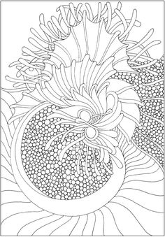 CH Tranquility Colouring Book - Welcome to Dover Publications Pattern Coloring Pages, Colouring Pages, Adult Coloring Pages, Coloring Sheets, Free Coloring, Creative Haven Coloring Books, Rug Hooking Patterns, Dover Publications, Cute Crafts