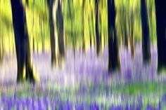 How to Take Creative Landscape Shots using Intentional Camera Movement (Digital Photography School) Movement Photography, Beautiful Landscape Photography, Photography Articles, Photography Camera, Abstract Photography, Photography Tutorials, Creative Photography, Nature Photography, Photography Ideas