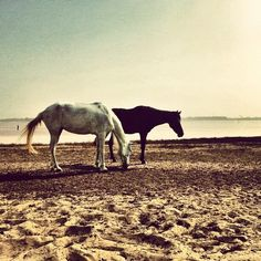 """Comment: charles4238 said """"Chevaux au Lac Rose #Senegal #Africa #beautiful #nice #photooftheday #sun #instagood #summer"""""""