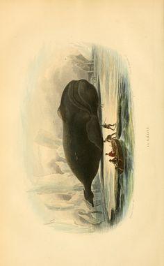 t. 1 - Histoire naturelle de Lacépède : - Biodiversity Heritage Library