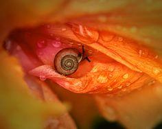 Eye Of Nature by Janet Gupta
