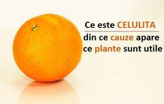 CELULITA – din ce CAUZE apare și ce PLANTE sunt recomandate Videos Funny, Young Living, Health, Wellness, Diet, Plant, Health Care, Salud