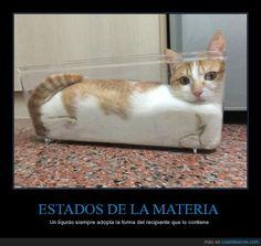 ESTADOS DE LA MATERIA - Un líquido siempre adopta la forma del recipiente que…
