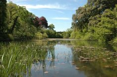 Get outdoors and enjoy an easy walking trail around Bosherton's beautiful lily ponds, cared for by the National Trust. Lily Pond, Snowdonia, Get Outdoors, Sandy Beaches, Travel Around, Fresh Water, Things To Do, Trail, Walking