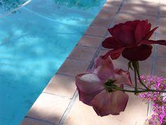 Eden Range Pool Coping, Best Web, Range, Plants, Design, Cookers, Plant, Planets