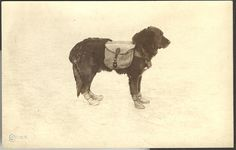 Rufus the life saving dog of Death Valley, 1914