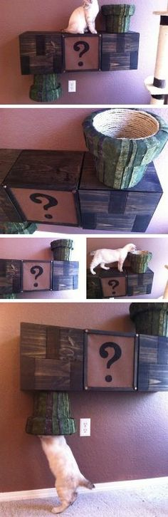 Mario warp pipe / cat complex. -- the ONLY reason I'd get a kitty! LOL