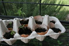 Start seeds in eggshells... once they sprout you can put them directly in the ground- shell and all. The shell gives extra nutrients to the plant as it breaks down. This site has some good tips on how to get started.