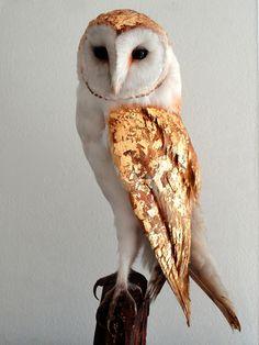 The Gilded Owl / design blog  www.thegildedowl.com