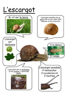 Fiche escargot Plus