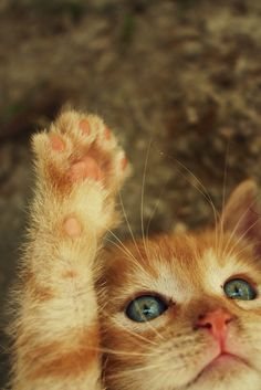 Kitties are so adorable! Cute Kittens, Cats And Kittens, Funny Kitties, I Love Cats, Crazy Cats, Baby Animals, Cute Animals, Jungle Animals, Wild Animals