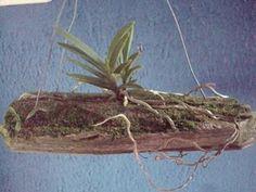 Paixão por orquídeas - Meu orquidário: Tutor - Pedaços de Tronco
