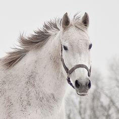 horses..always