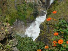 Flores en Nepal