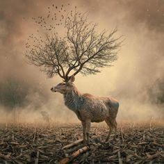 Surrealistische fotomanipulaties door Caras Ionut