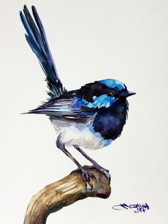 Fairy Wren Bird on the branch, small bird, blue bird ORIGINAL WATERCOLOR PAINTING by alisiasilverART on Etsy